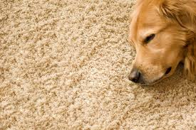 the dog owner s clean carpet guide