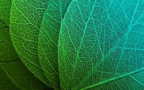 wallpaper 4k green leaves hd green