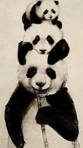 83 panda hd wallpapers on wallpaperplay