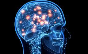 Una parte del cerebro sigue creciendo durante la edad adulta