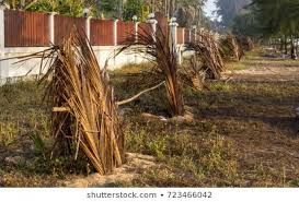 View Fence Coconut Leaf Coconut Palm Nature Stock Image 723466042
