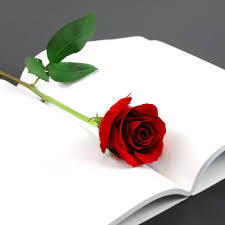 ورد أحمر جميل ورد الحب صور ورد وزهور Rose Flower Images