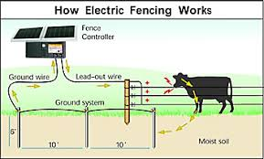 How Electric Fencing Works Zareba Systems Electric Fence Solar Electric Fence Electric Fence For Cattle