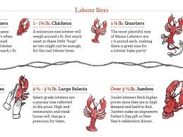 Picking the Right Size Lobster