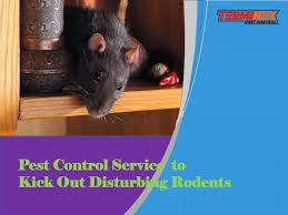 PPT - Pest Control Service to kick Out Disturbing Rodents PowerPoint  Presentation - ID:7599784