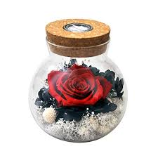 preserved rose com