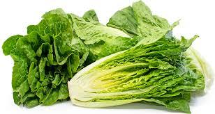 romaine lettuce information recipes