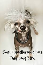 small hypoallergenic dogs that don t