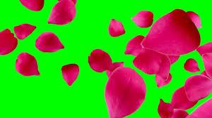 200 free green screen green videos
