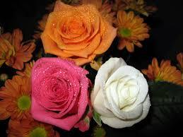 بوكيه ورد ابيض افضل الوان الورد بنات كول