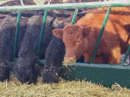 Livestock Feeding Equipment Hi Hog