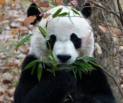 Bei Bei's Trip To China Featured All ...