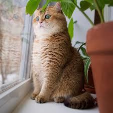 Phiên bản đời thực của mèo đi hia cực nhắng - Báo Kiến Thức