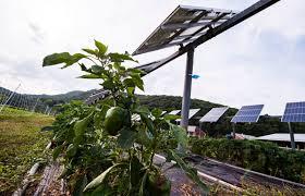 Solar Panels On Farmland Have Huge Electricity Generating Potential Yale E360