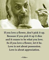 osho chandra mohan jain love quote image if you love a flower