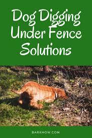 Dog Digging Under Fence Solutions Dog Fence Dogs Digging Holes Dog Solution