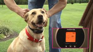Motorola Wireless Dog Fence Youtube