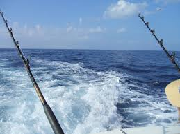nature ocean sport boat