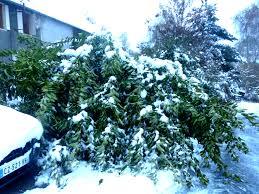 """Résultat de recherche d'images pour """"tempête de neige dévastatrice"""""""""""