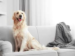 5 quick and easy ways to remove pet hair