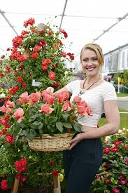 homebase and harkness roses launched