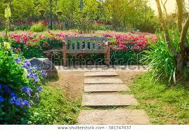 flower garden park morning sunlight