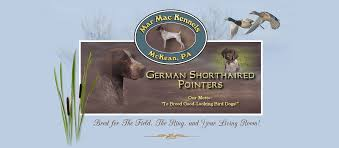 german shorthaired pointers pa