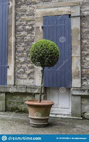 Beautiful Boxwood In Monastery Garden Of Citadel Boulogne Sur Mer Stock Photo Image Of Boulogne Herb 151023366