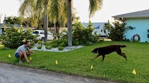 How Electric Dog Fences Work How Underground Dog Fences Work Dog Guard Of South Florida
