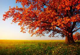 scenic autumn desktop wallpapers top