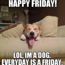 happy friday lol i m a dog everyday
