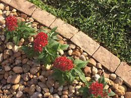 10 Garden Edging Ideas With Bricks And Rocks Garden Lovers Club
