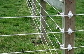 Electrobraid Horse Fence Reviews Many Experts Say It S Excellent Horse Is Love