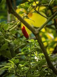 Praveen Haridas photography - Home | Facebook