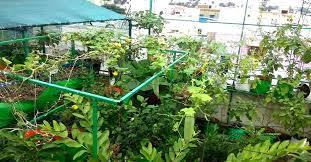vegetable garden terrace garden