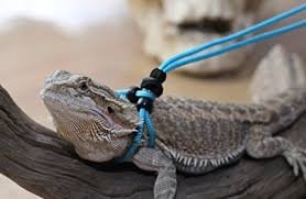 best bearded dragon leash and harness