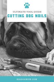 best tools for large dogs black nails