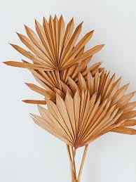 Pin by addie stewart on Home in 2020   Palm leaves, Leaf decor, Dried  flowers