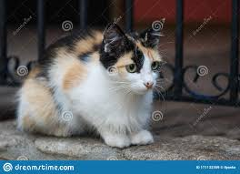 Frightened Tabby Street Cat Sitting Outdoor Against Metal Fence Stock Image Image Of Tabby Fluffy 171132359