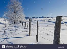 Fence And Hoarfrost On Tree Near Bourget Ontario Canada Stock Photo Alamy