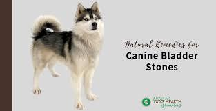 canine bladder stones natural remes