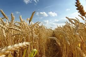 INE prevê aumento da produtividade dos cereais | Rádio Pax
