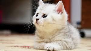 صور قطط كيوت اجمل صور القطط كيف