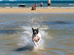 The Best Dog Beaches in Melbourne - realestate.com.au