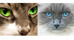 5 fun facts about cat s eye colors that
