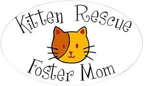 Amazon Com Cafepress Foster Mom Oval Sticker Oval Bumper Sticker Euro Oval Car Decal Home Kitchen