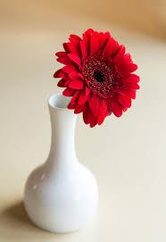 gambar menanam daun bunga rumah bunga aster buket vas