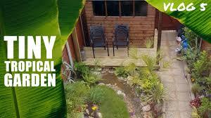 vlog 6 tiny tropical garden uk you
