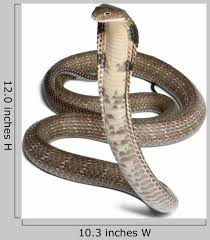 King Cobra Ophiophagus Hannah Wall Decal Wallmonkeys Com