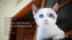Outdoor Versus Indoor Cat Fences Pet Stop Dog Fence Company